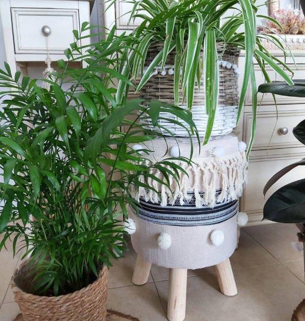Planta Camaedorea y planta Clorofitum en decoración boho-chic, tiestos de cuerda y mimbre sobre taburete étnico
