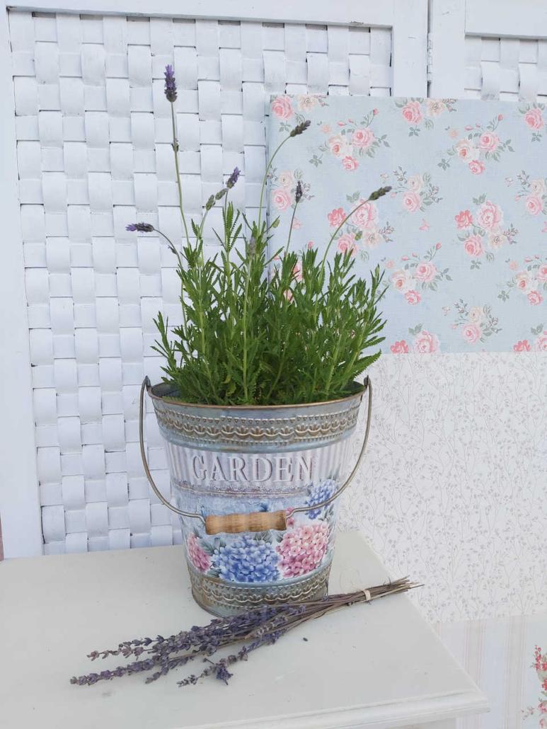 Planta de la lavanda aromática para el hogar