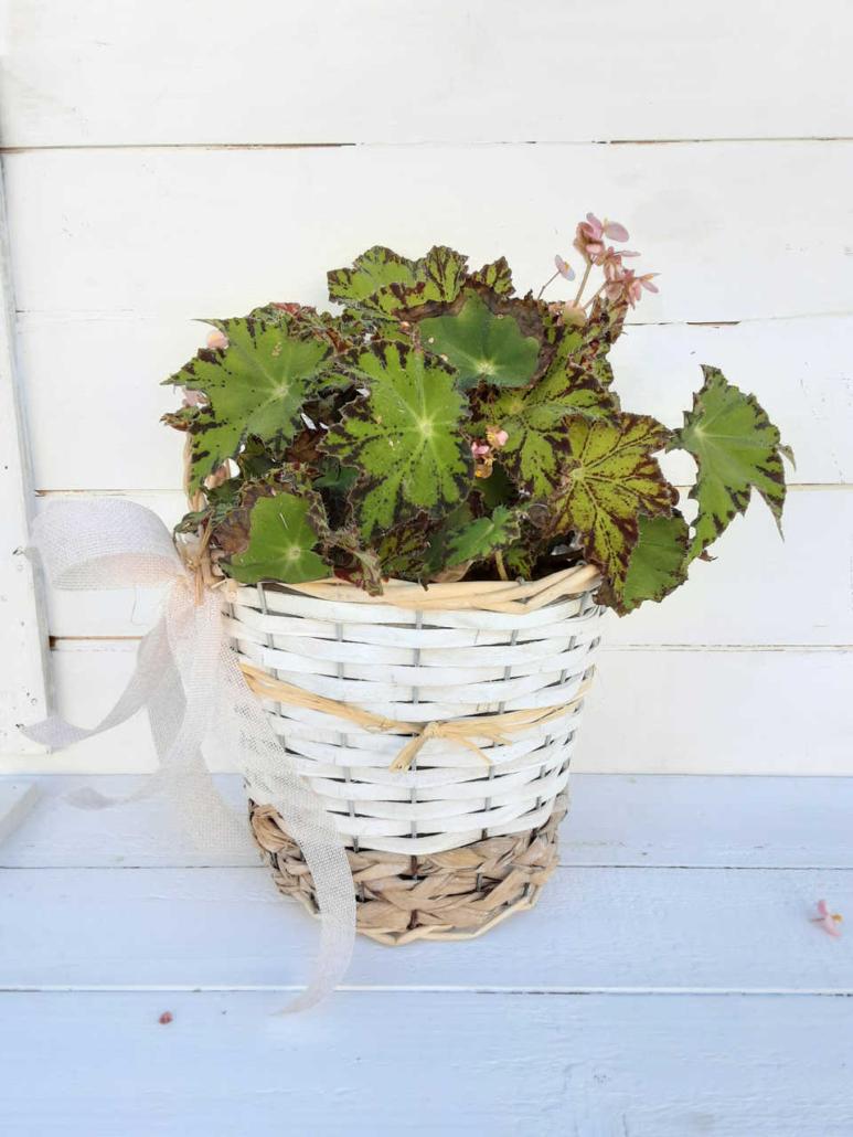 Cesta macetero para plantas de mimbre natural