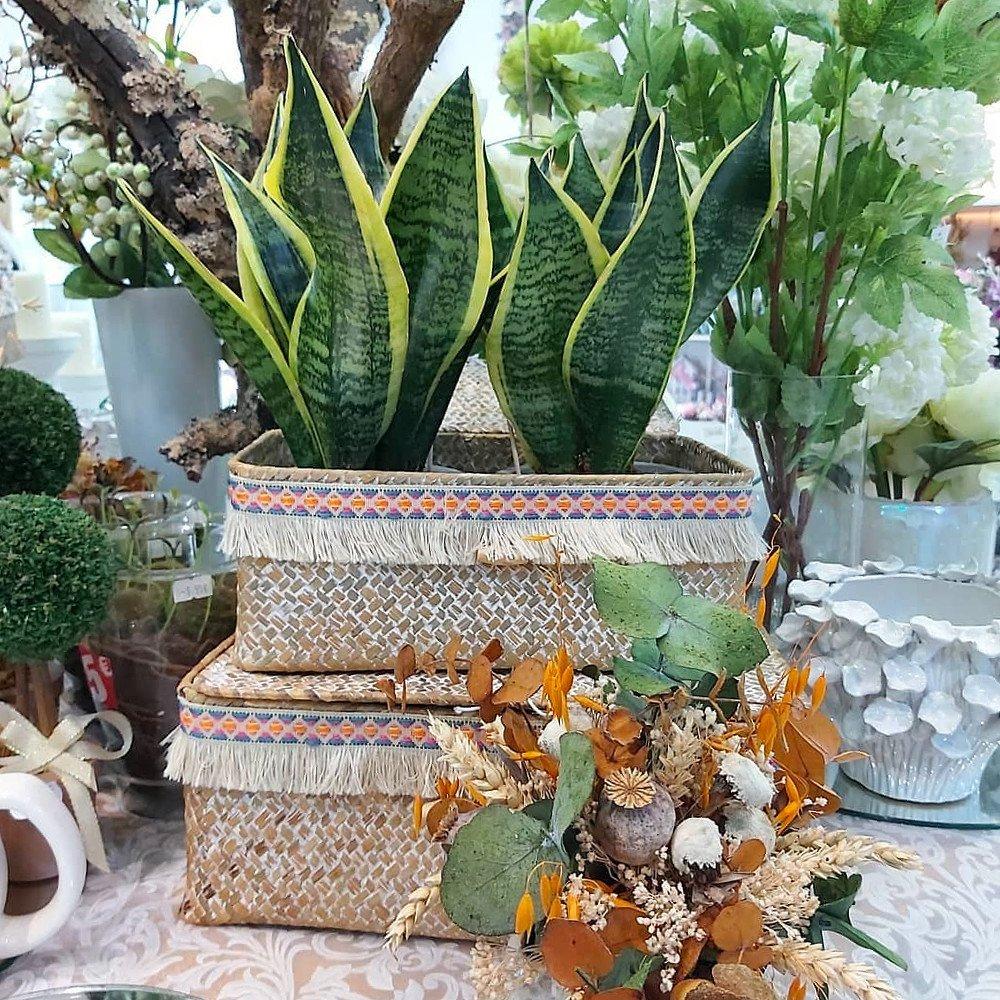 Sansevieria, planta de interior muy resistente, en la foto se muestran dos plantas en un cesto de fibras naturales estilo boho-chic acompañadas de un ramillete de flores preservadas en tonos ocre