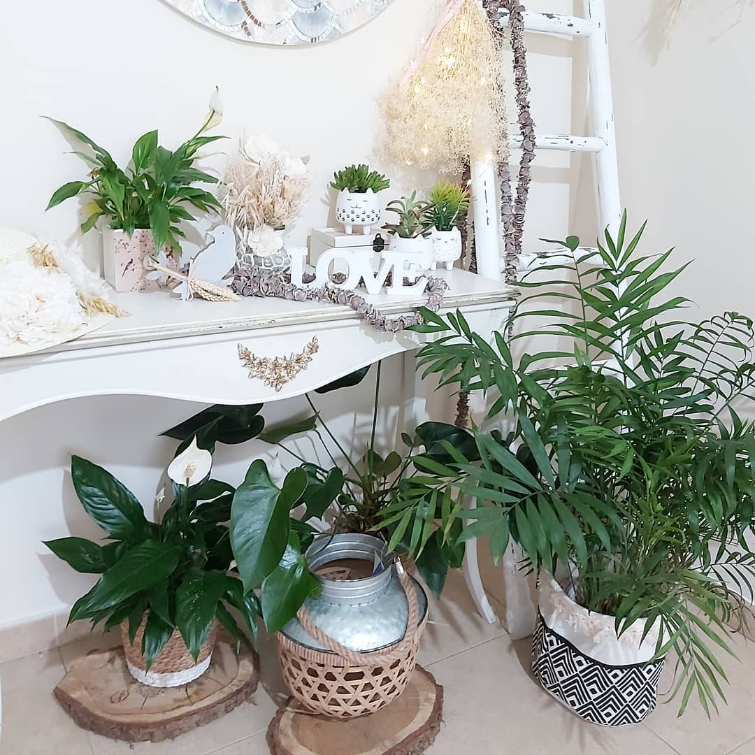 Recibidor de casa lleno de plantas en macetas grandes y mueble de color blanco con macetas animal y suculentas