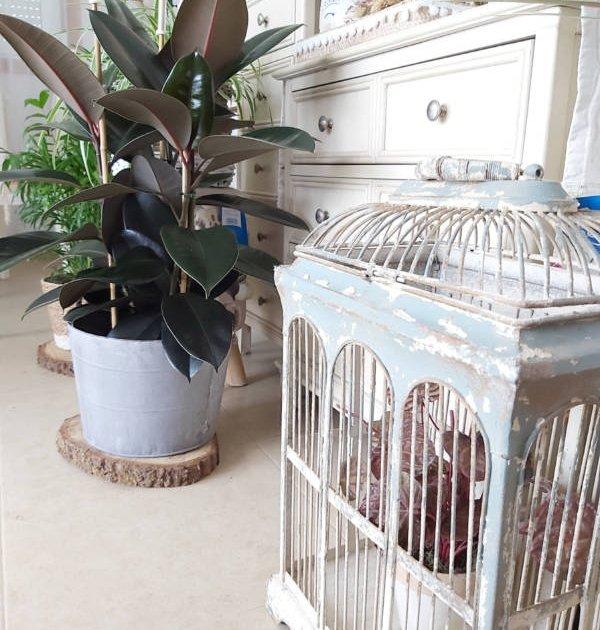 Ficus en maceta de suelo para ambientar el salón o una zona de paso. Con macetas decorativas de latón y de materiales naturales respetuosos con el medio ambiente.