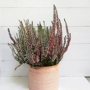Maceta de cerámica rosada estilo clásico y natural