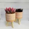 Maceta con pies de macera de tamaño ideal para cactus, suculentas y plantas pequeñas