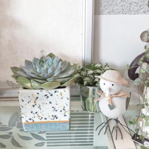 Maceta cuadrada para suculentas, cactus y plantas pequeñas que darán personalidad a tu casa.