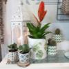 Maceta con ilustraciones vegetales que da un toque de naturaleza a tu hogar