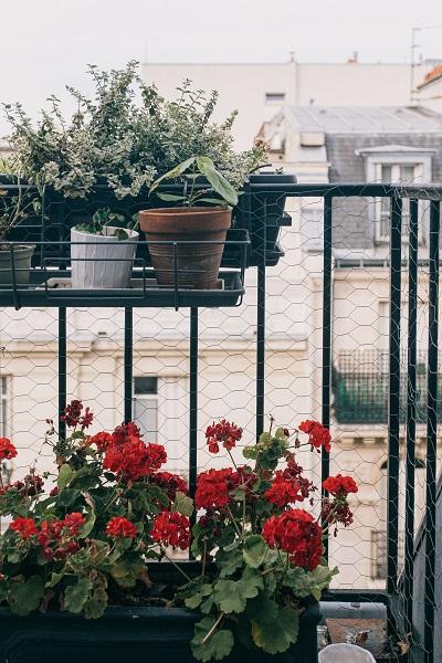 Plantas aromáticas en el balcón