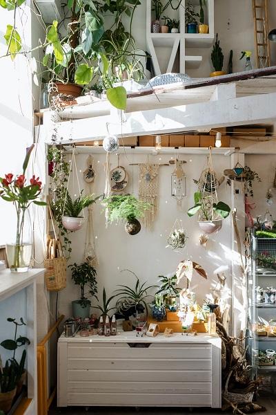 Hogar lleno de plantas