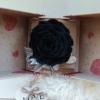 Rosa eterna negra en caja sorpresa con lazo decorativo elegante.