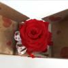 Rosa eterna roja en caja sorpresa para comprar online y enviar a domicilio