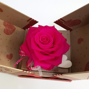 Rosa preservada fucsia para regalar a una amiga