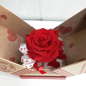 Rosa roja eterna en caja para conservarla eternamente