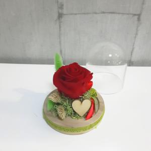 Rosa roja eterna en bombonera con base de madera para conservarla por largo tiempo